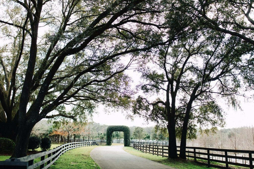 Club Lake Plantation - old oak trees lining country drive