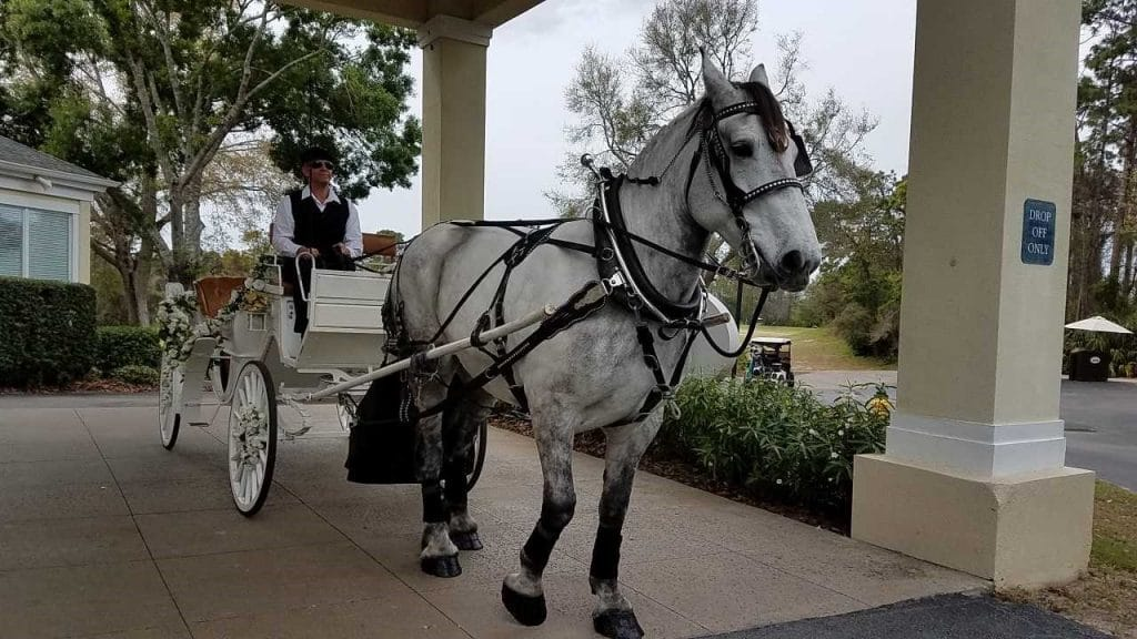 Debary-Golf-Country-Club-Horse and buggie transportation