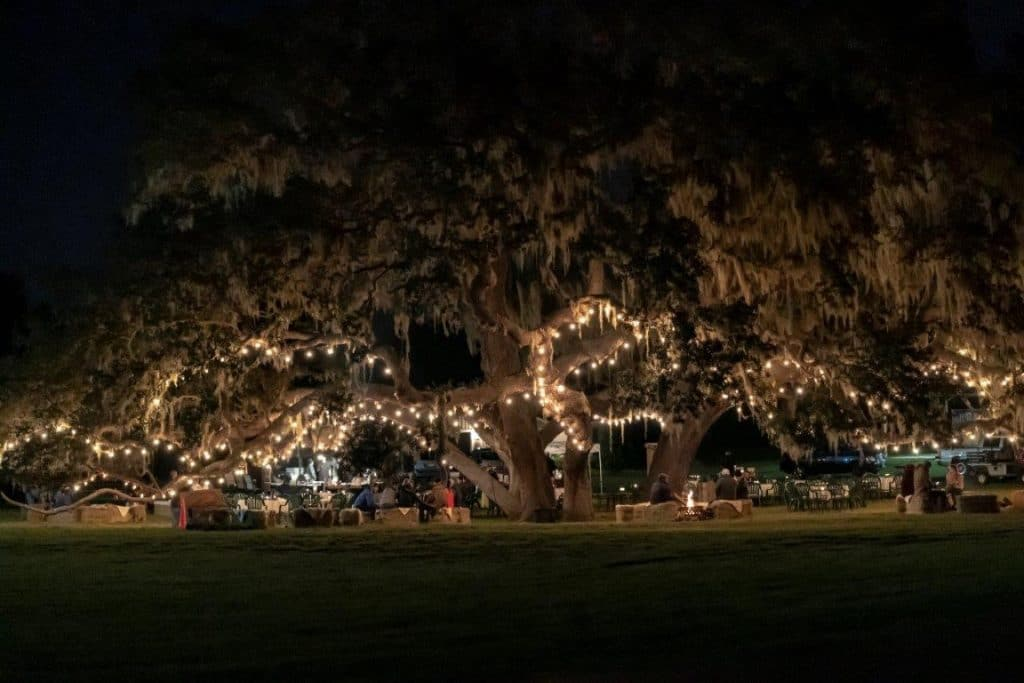 The-Villages-Polo-Club-Large oak trees at night with lights draped throughout them