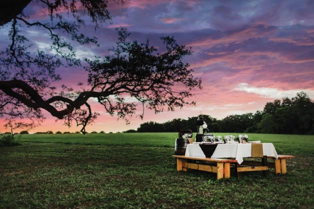 The-Villages-Polo-Club-Sun setting behind a tree with picnic bench table setting.