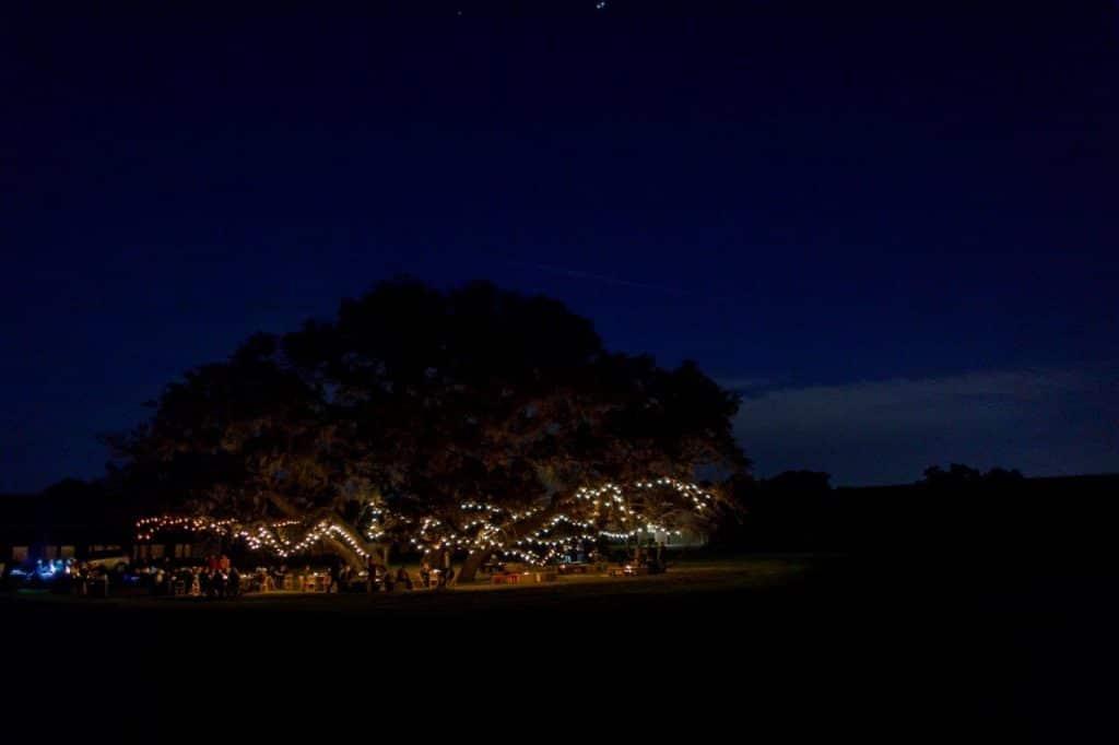 Villages Polo Club - market lighting transforms sprawling oak tree at night