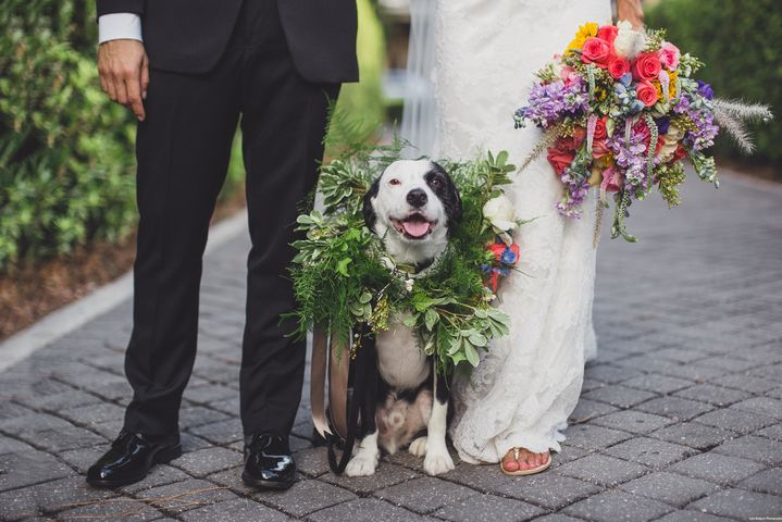 Anna Christine Events - bride & groom feet with dog wearing greenery collar