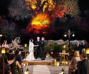 A Beautiful Ceremony - officiant presiding over Disney Animal Kingdom wedding