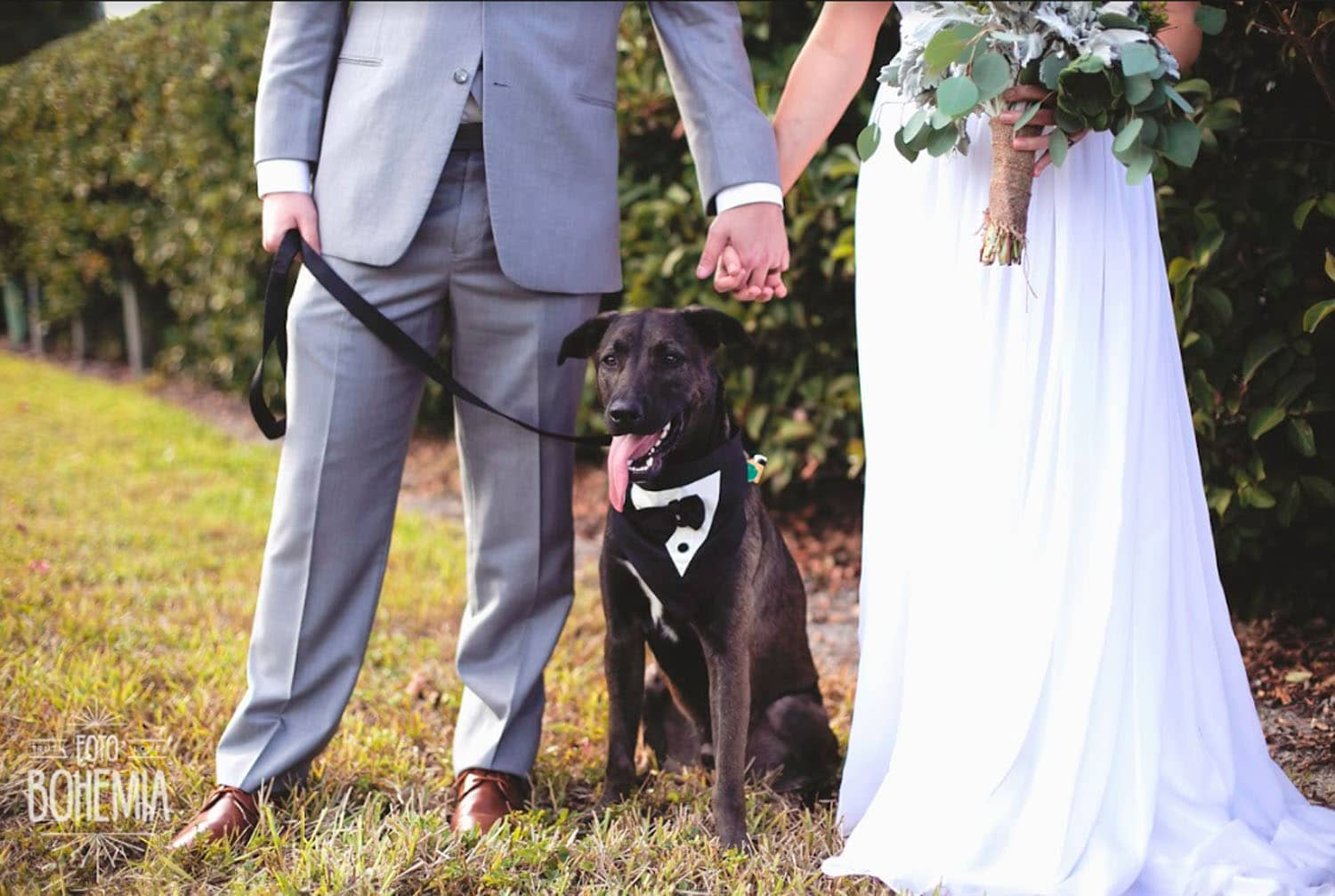FairyTail Pet Care - newlyweds hold hands with dog between them