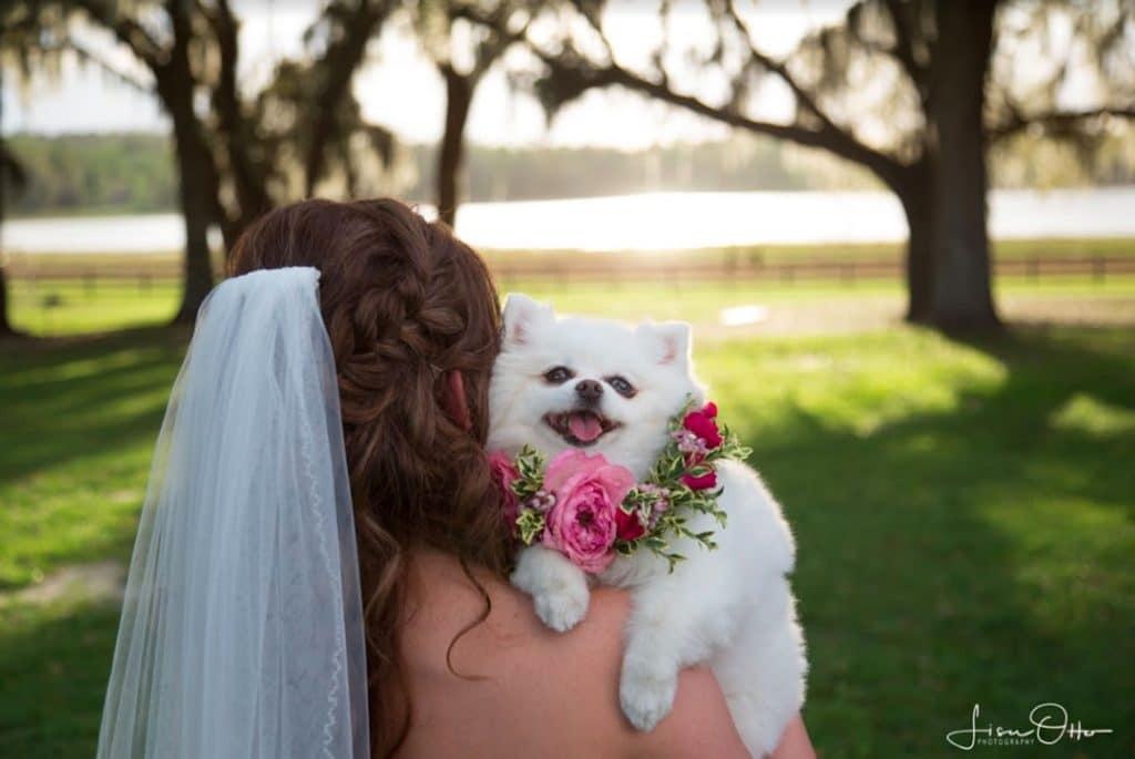FairyTail Pet Care - bride with dog on shoulder