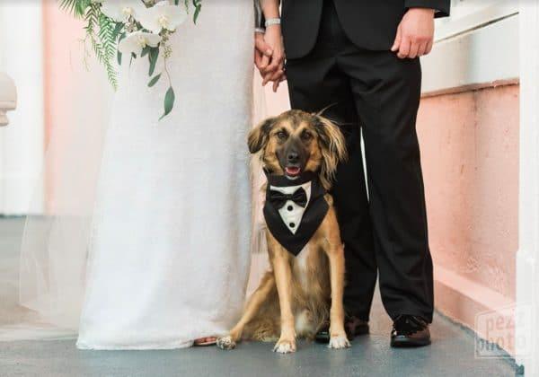 Wedding Day Pet Care Spotlight – FairyTail Pet Care