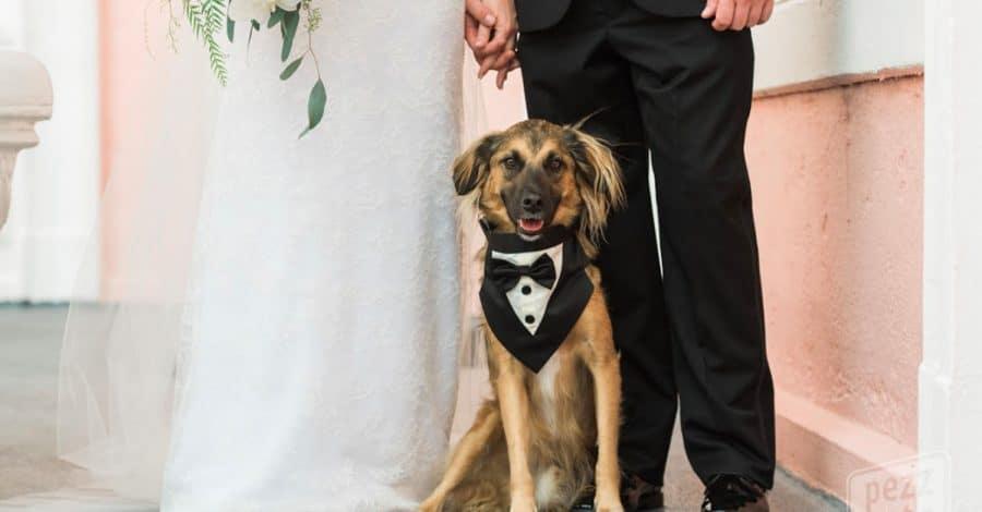 FairyTail Pet Care - dog with tux neckerchief