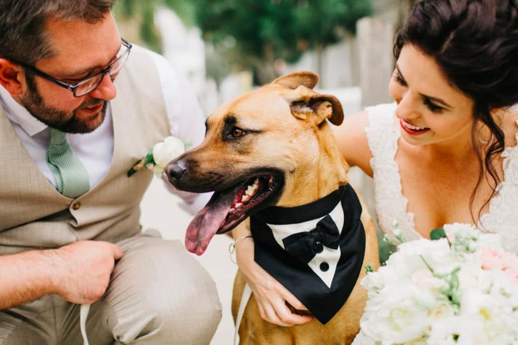 FairyTail Pet Care - bride and groom petting dog