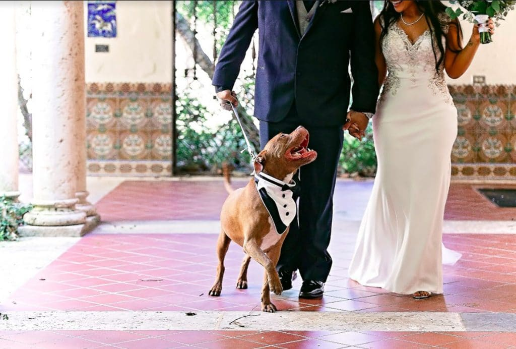FairyTail Pet Care - happy groom, bride, and dog
