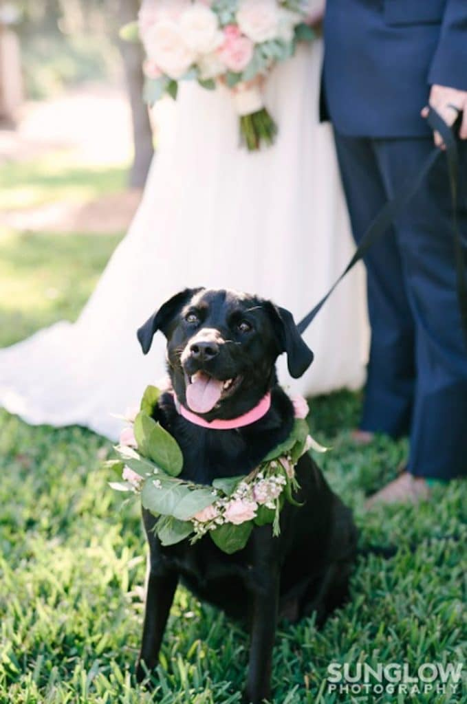 FairyTail Pet Care - black lab with floral collar