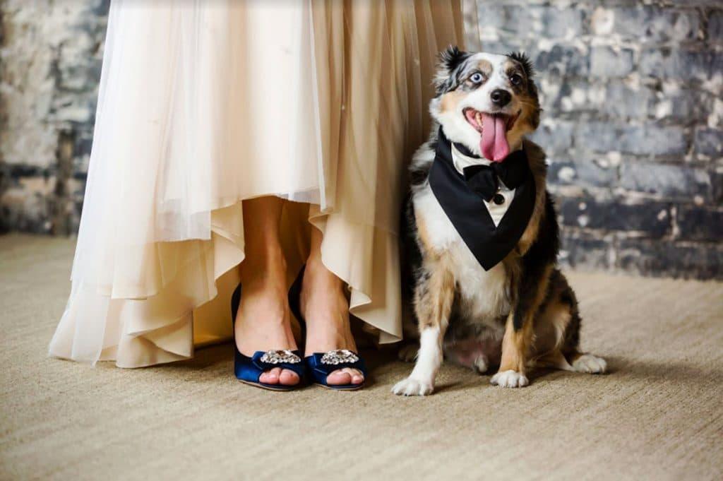 FairyTail Pet Care - Australian Shepherd posing at bride's feet