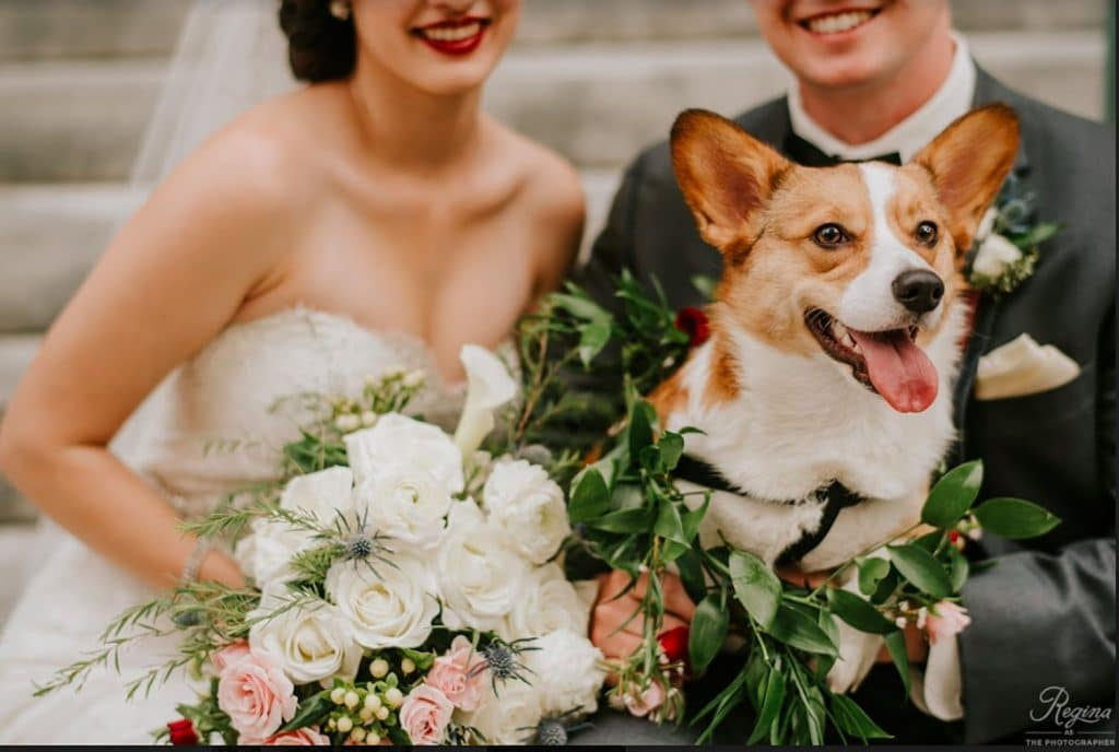 FairyTail Pet Care - bride and groom posing with beautiful Corgi