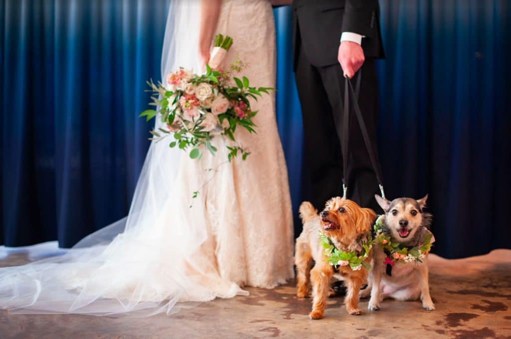 FairyTail Pet Care - dogs with floral collars