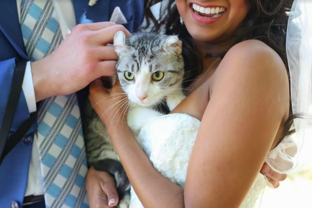 FairyTail Pet Care bride and groom holding cat