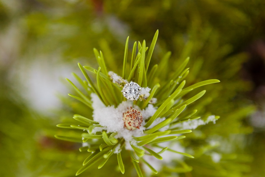 Steven Miller Photography - close up of ring and snow on pine branch