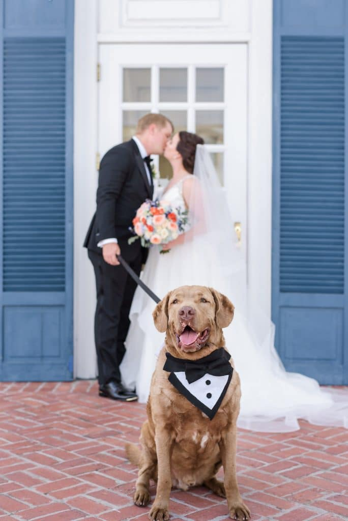 FairyTail Pet Care - bride and groom kissing with dapper dog on a leash