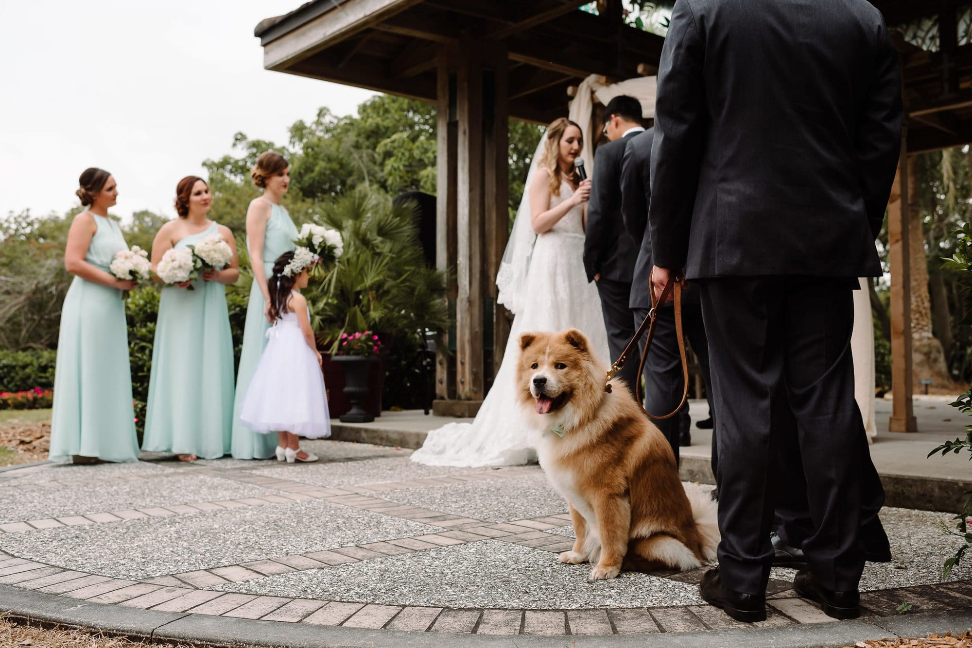 Chow dog on leash during ceremony