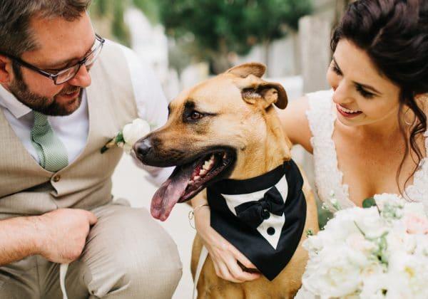 Central Florida Wedding Vendor Spotlight – FairyTail Pet Care