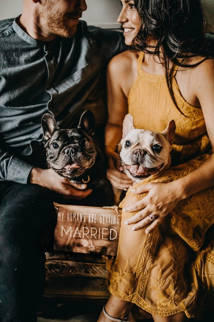 engaged couple with dogs on laps