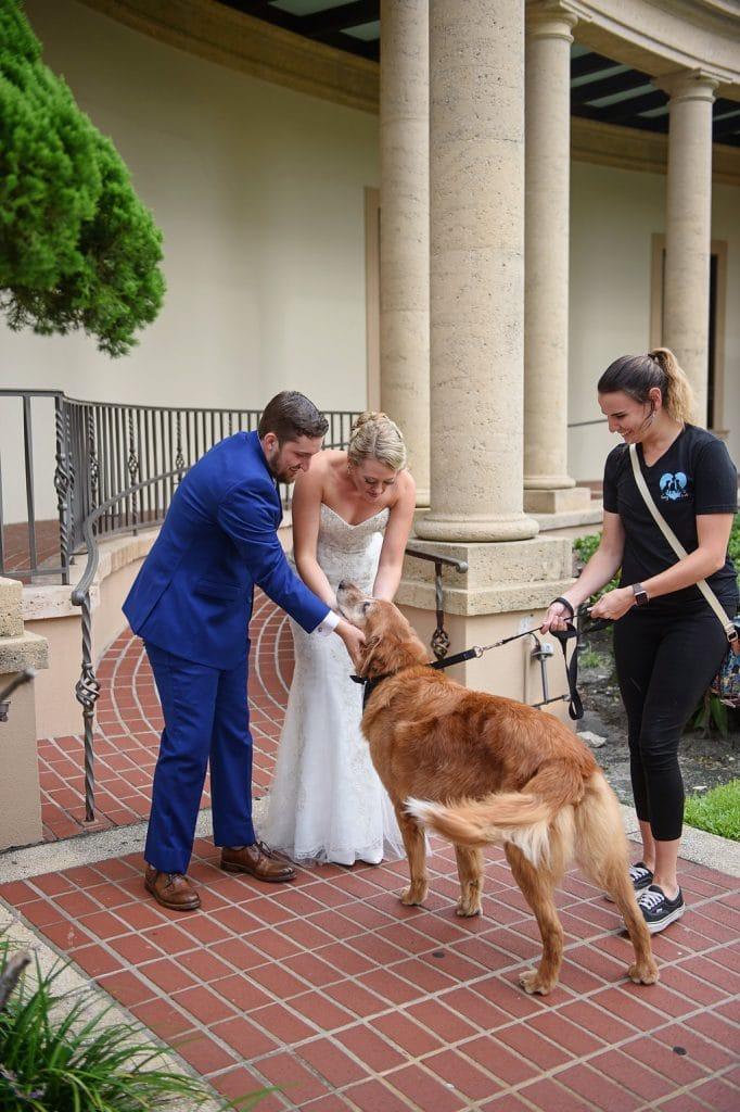 bride and groom greeting golden retriever