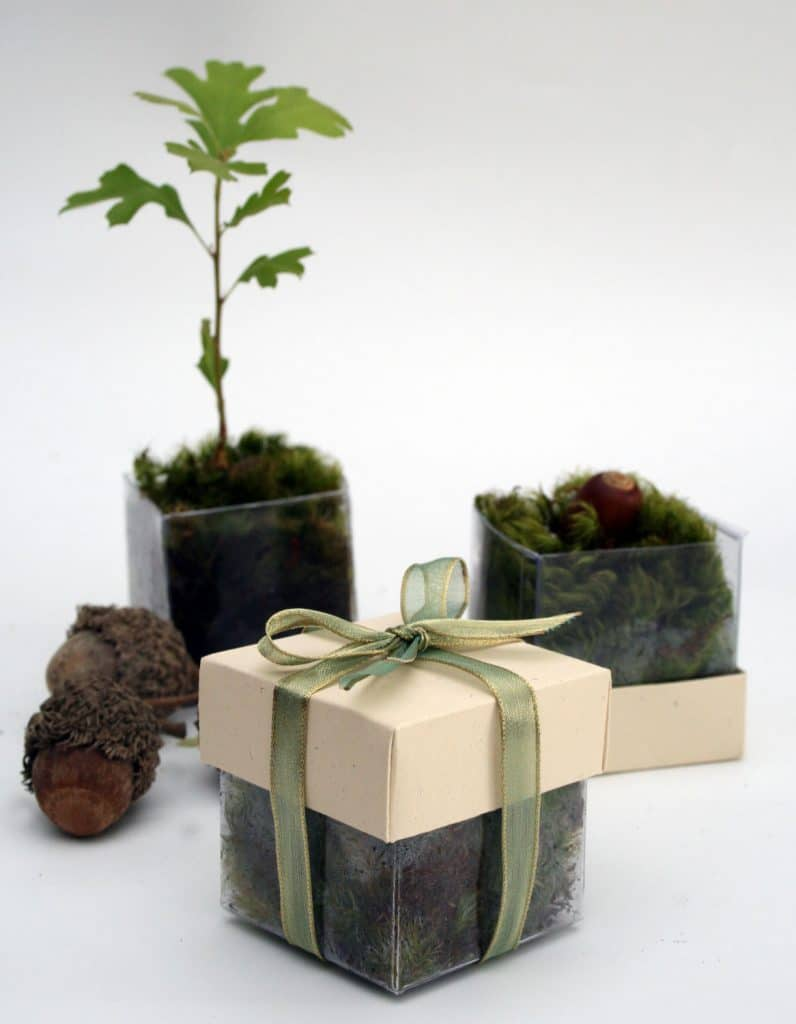 The Magnolia Company - cute acrylic boxes for sapling or seed wedding favors