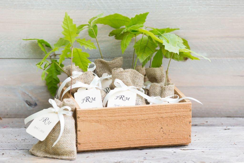 The Magnolia Company - live plants as wedding favors