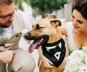 bride and groom wedding with dog in tuxedo pet sitting