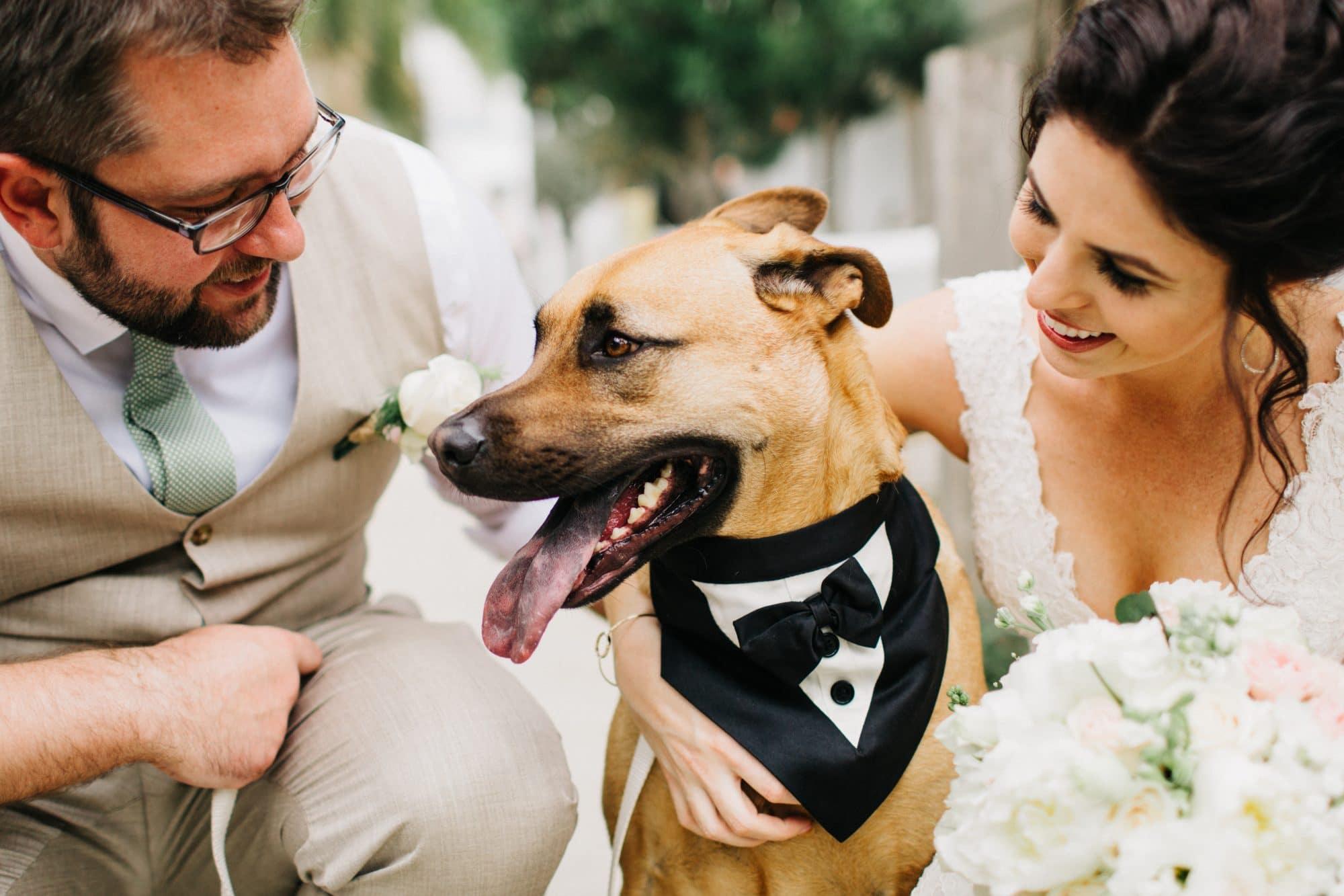 FairyTail Pet Care Wedding Pet Sitting