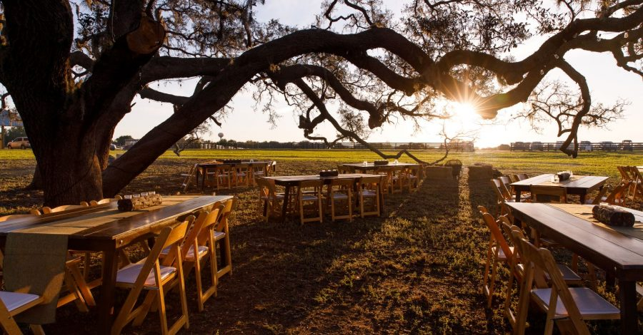 The Villages Polo Club - simple table and chairs set up beneath sprawling oak tree