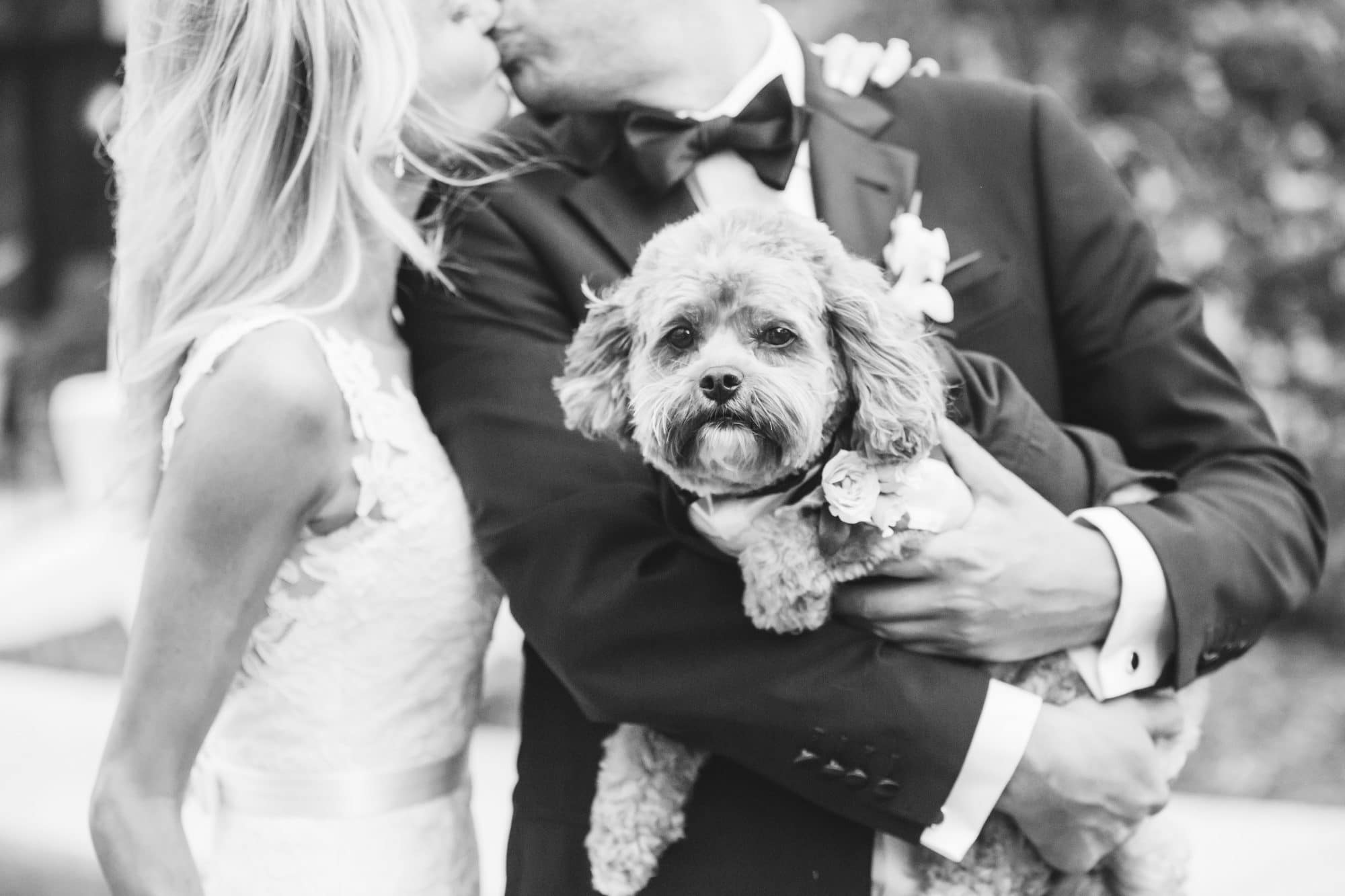 KMD Creations Photography and Film - bride and groom kissing while groom holds dog