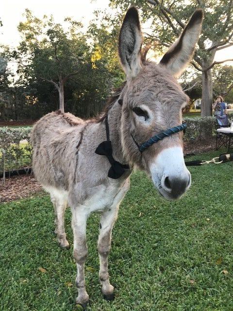 donkey wearing a bow tie.