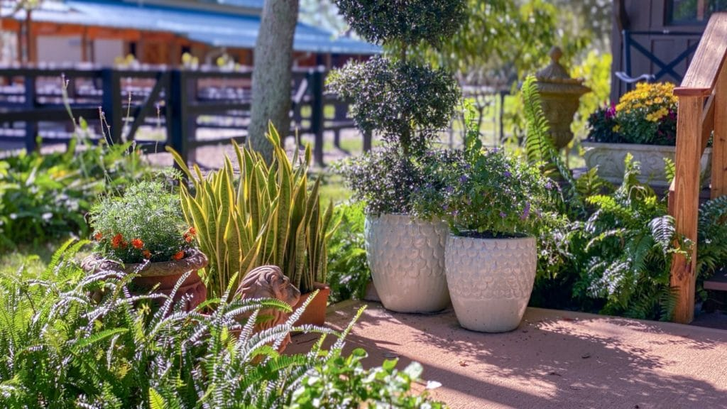 BLB-Hacienda-Potted plants on property