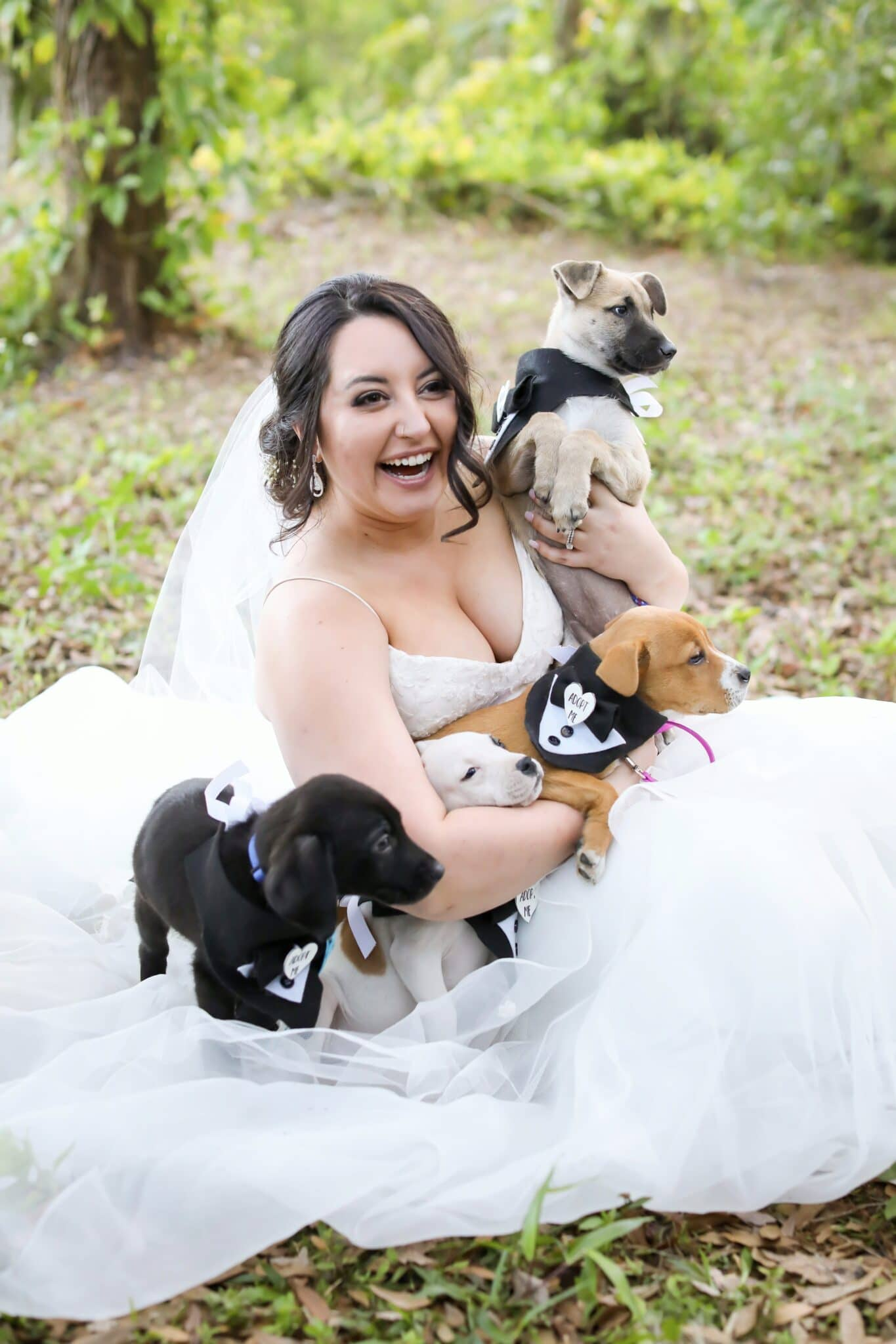 bride witting in gown holding 2 puppies