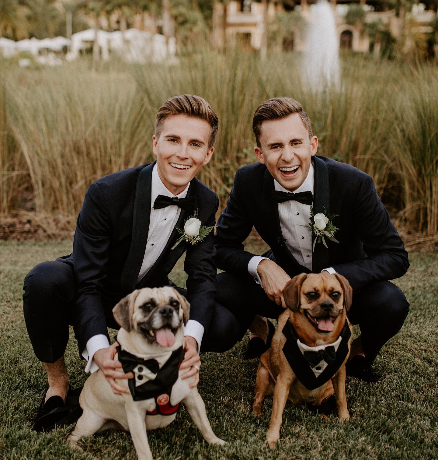 grooms with dogs