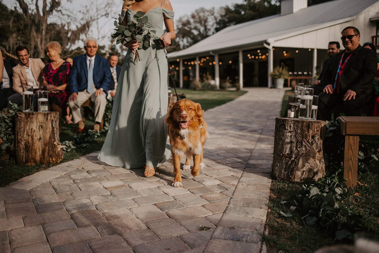 dog with bridesmaid at ceremony