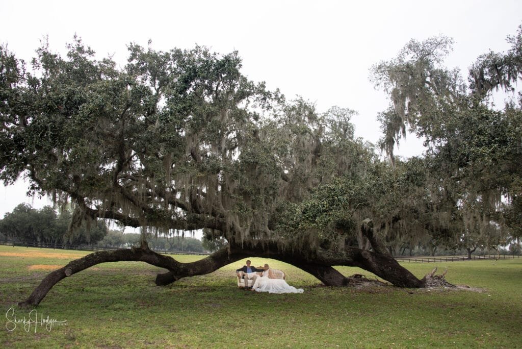 bride and groom on couch under large oak tree
