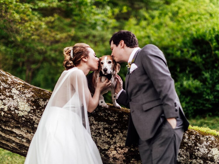 include your pet in your wedding, bride & groom kissing dog sitting on log