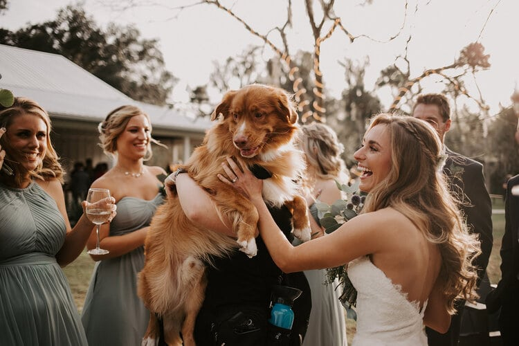 include your pet in your wedding, dog being held at cocktail party with guests