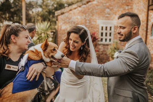 include your pet in your wedding, dog with bride & groom and FairyTail