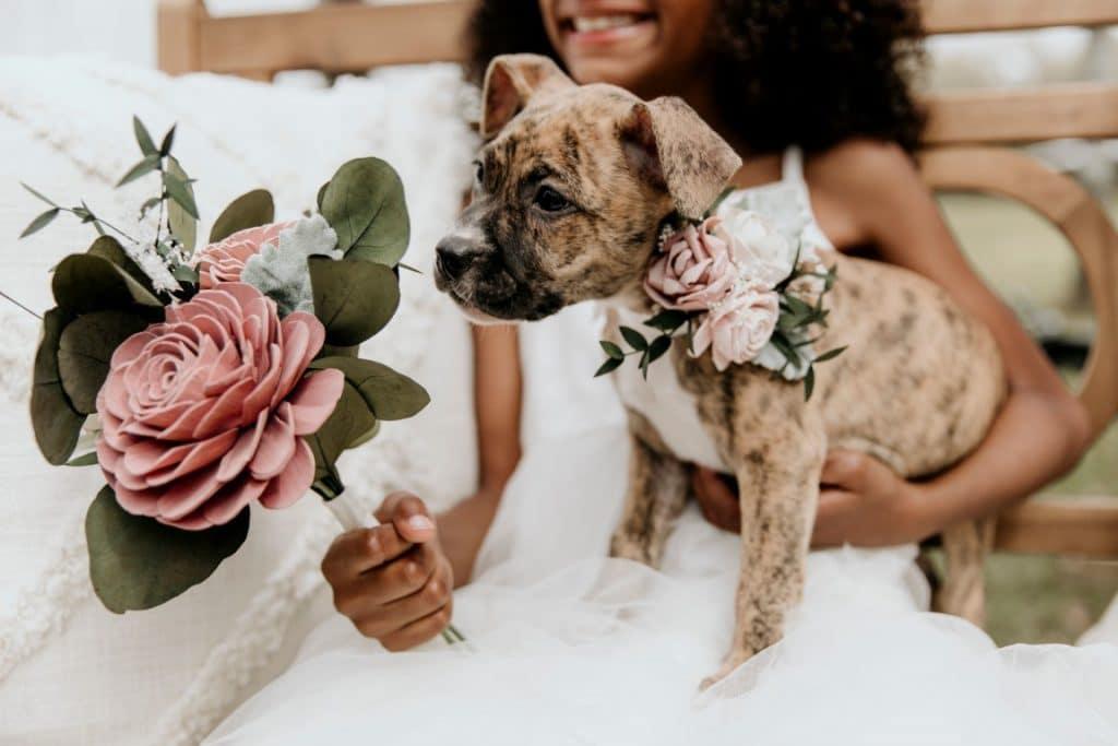 Furry-Ventures-Pet-Care-