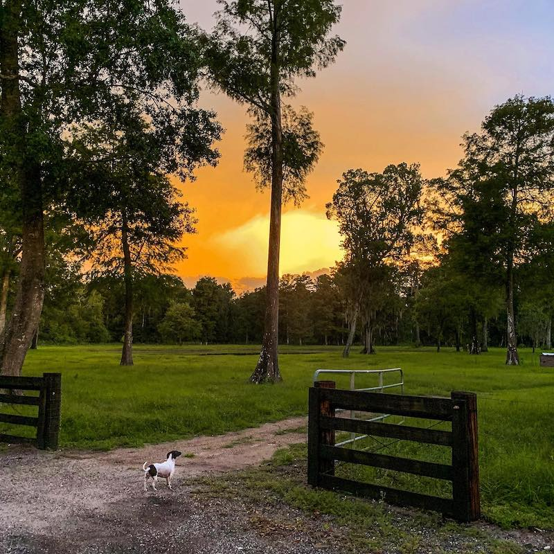 Cypress Creek Farmhouse sunset over country landscape