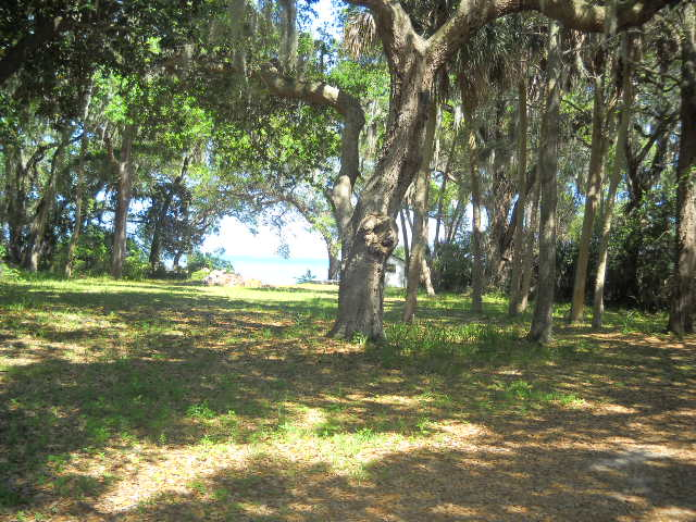 large oak trees with spanish moss at outdoor waterfront wedding venue