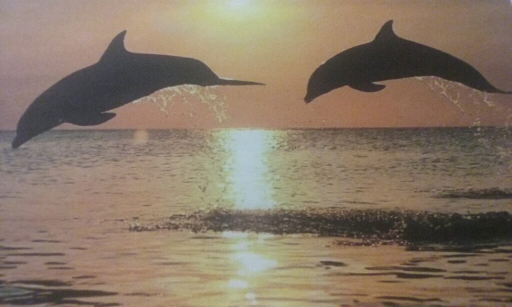 dolphins leaping out of water at sunset in titusville florida