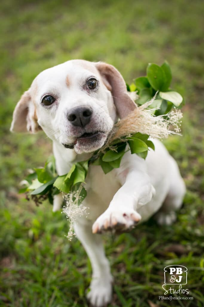 close up of dog with greens & flower collar
