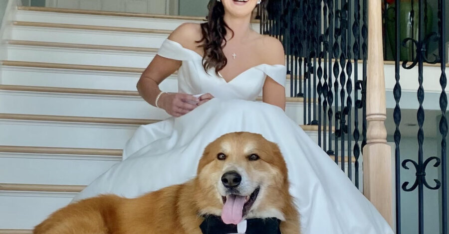 FairyTails, dog with bride on steps
