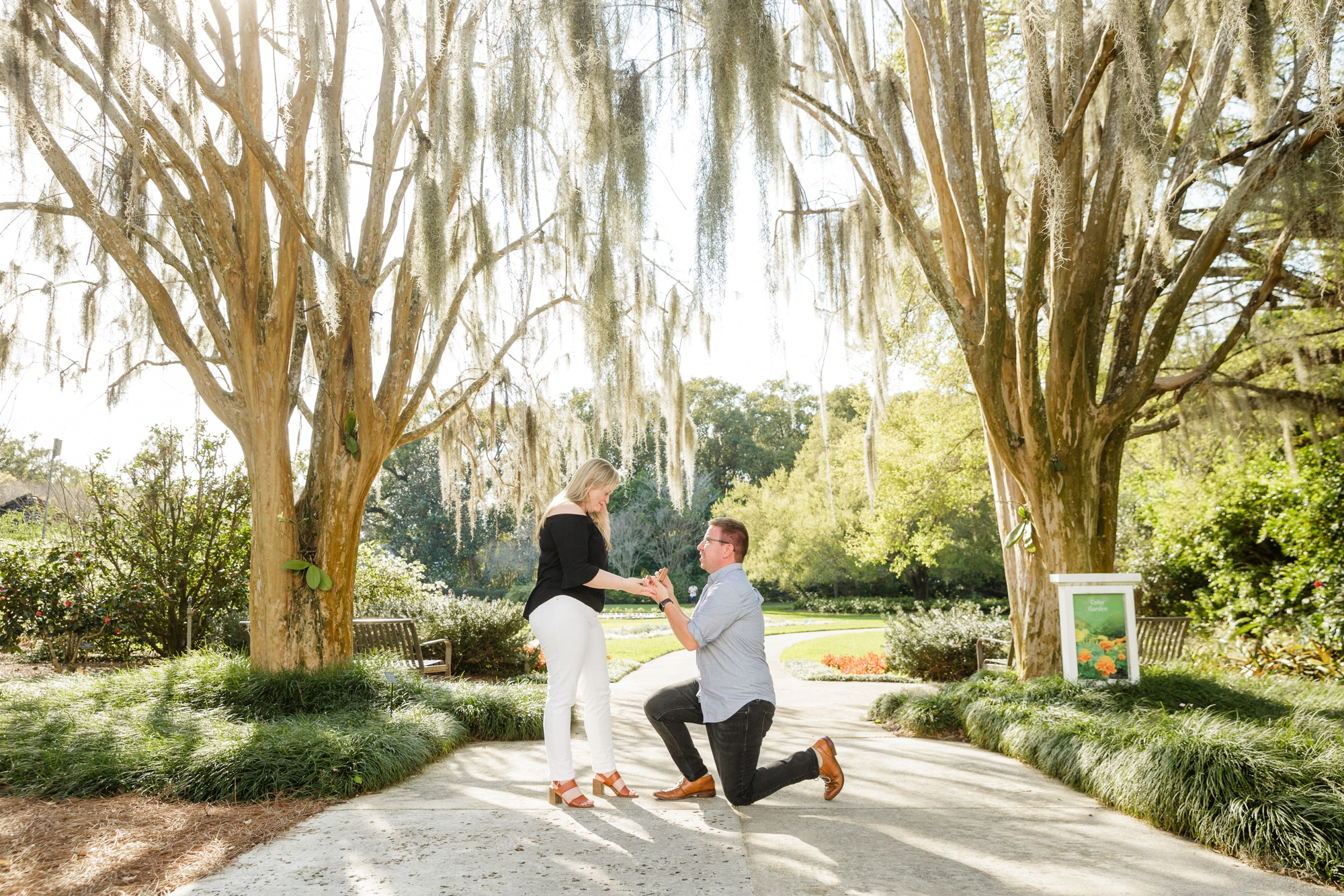 outside on the sidewalk in between two big tress with spanish moss hanging from them man gets on one knee in front of woman and proposes marriage