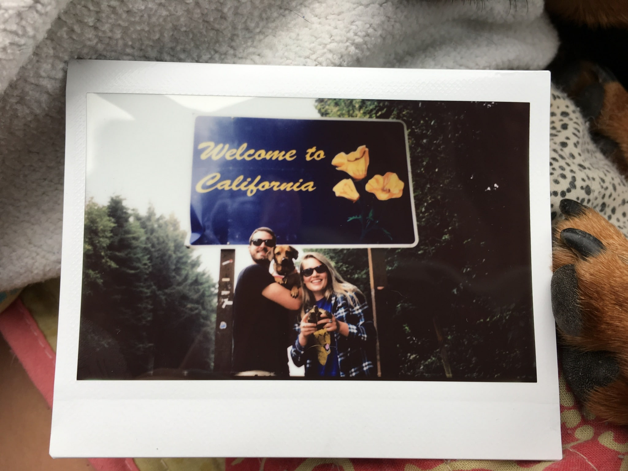 picture of a polaroid picture with a couple standing in front of the welcome to california sign wearing sunglasses and each holding a weiner dog