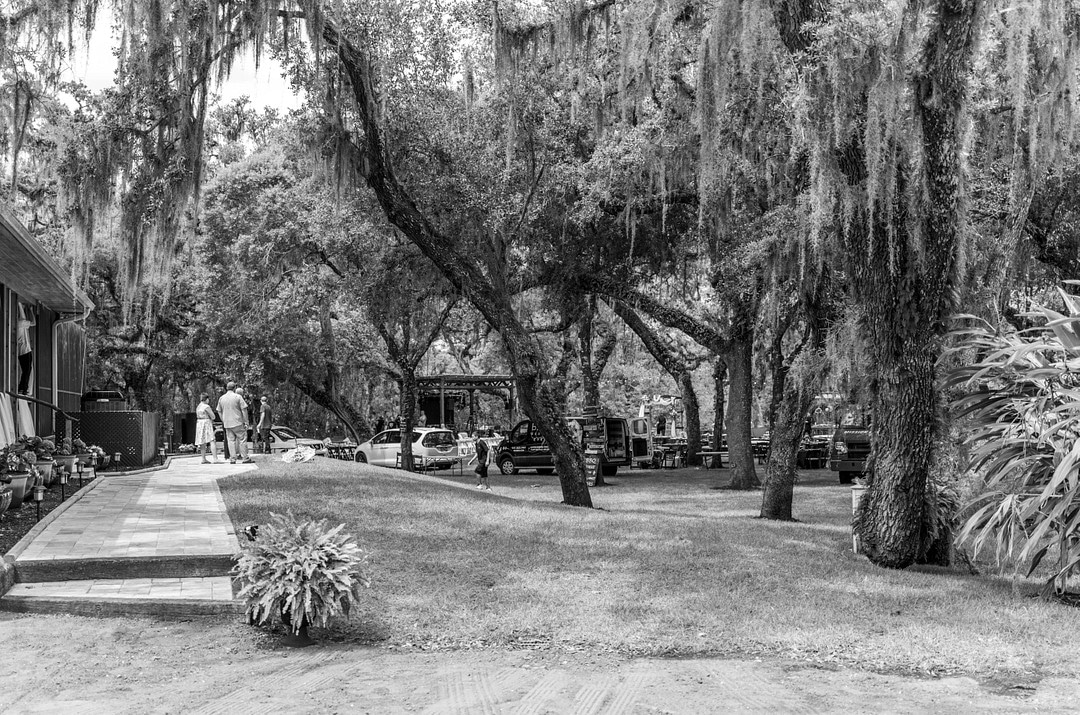 black and white image of nature on property with sidewalk on the left and a lot of trees with spanish moss hanging from them
