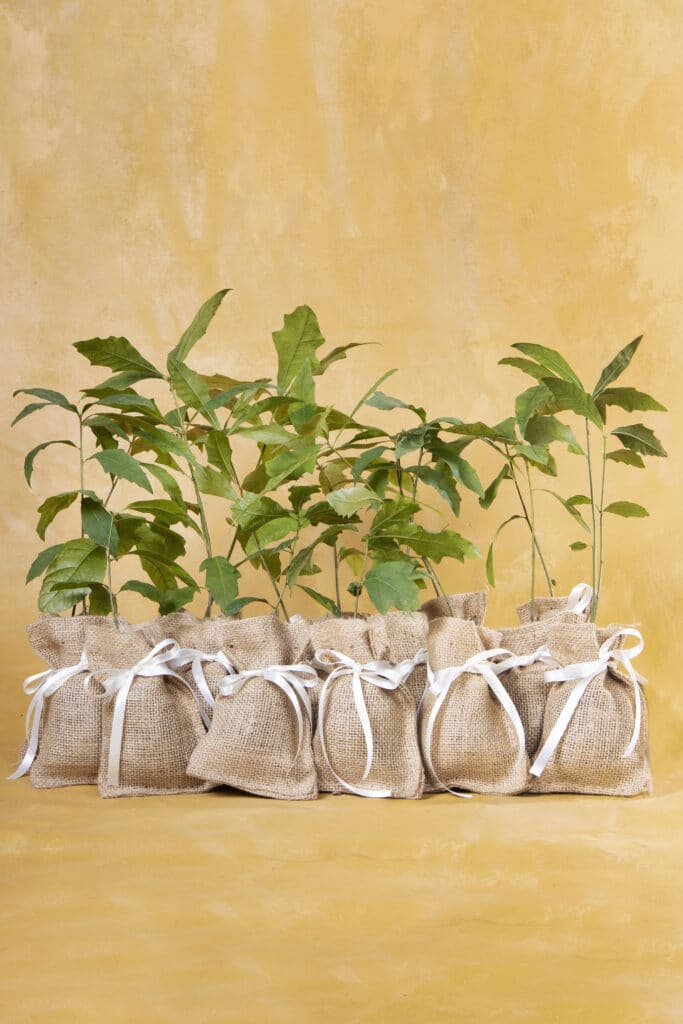 burlap sacks filled with young plants as favors for wedding guests